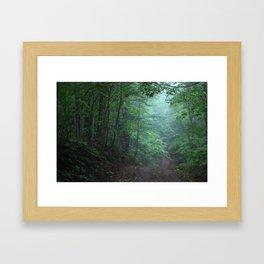 Light in the Forest Framed Art Print