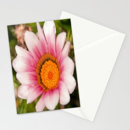 Southern African White ❁ Purple Gazania Flower Stationery Cards