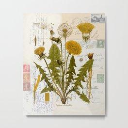 Vintage Dandelion on Antique Postcards Metal Print