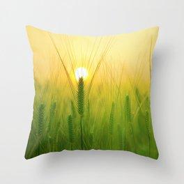 Morning Barley Field Throw Pillow