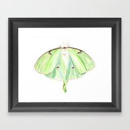 Luna Moth Art, Green Butterfly, Birds and Berry Studio, Anne hockenberry Framed Art Print