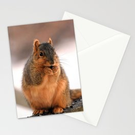 Foxilla Stationery Cards