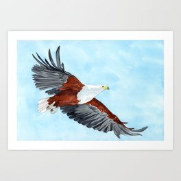 African Fish Eagle (haliaeetus vocifer) Art Print