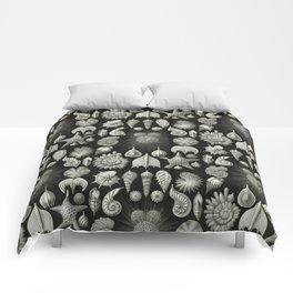 Ernst Haeckel - Thalamphora (Seashells) Comforters