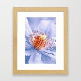 Clematis blue macro 028 Framed Art Print