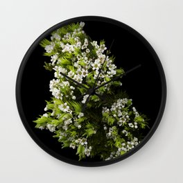 Diosma White Cape Flowers Wall Clock
