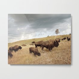 Buffalo Picture Metal Print