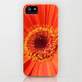 Daisy Dazzle iPhone Case