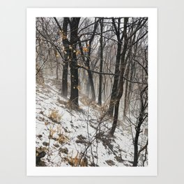 Winter at the park Art Print