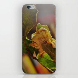 Old Jasmine iPhone Skin