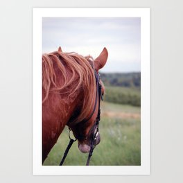 Staring into the fields Art Print