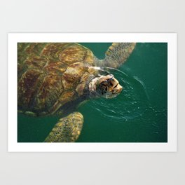 Sea Turtle Up For Air Art Print