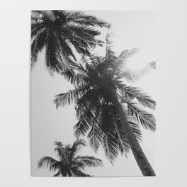 black and white palm trees Poster