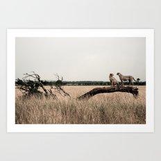 Cheetahs 2 Art Print