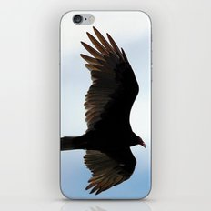 Turkey Vulture in Flight iPhone & iPod Skin
