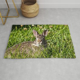 Young Cottontail Rabbit Rug