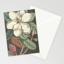 Magnolia Botanical Illustration, 1777 Stationery Cards