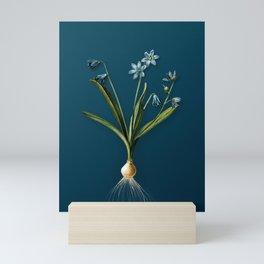 Vintage Floral Scilla Amoena Botanical on Teal Mini Art Print