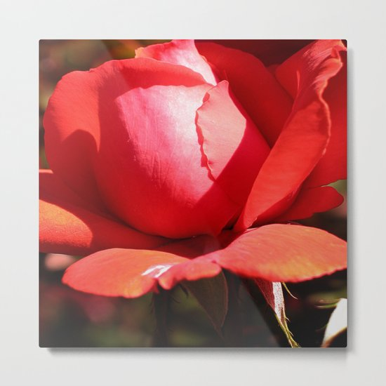 The Subject is Roses - 101 Metal Print