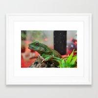 iggy Framed Art Prints featuring Iggy by IowaShots
