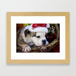 Brindle English Bulldog Puppy Wearing Santa Hat Looking out of a Basket Framed Art Print