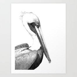 Black and White Pelican Art Print