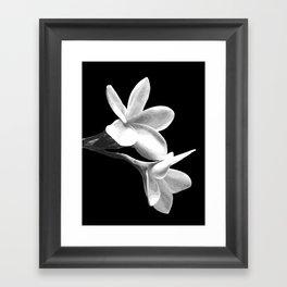 White Flowers Black Background Framed Art Print