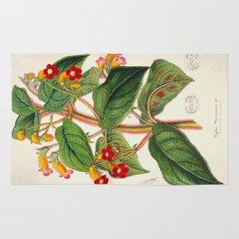 Lydia Warscewiczii Vintage Botanical Floral Flower Plant Scientific Illustration Rug