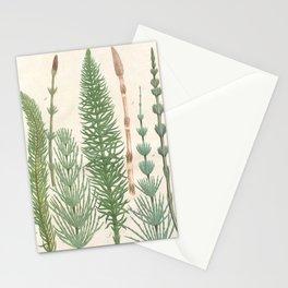 Botanical Horsetail Plants Stationery Cards