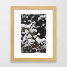 Winter Holly Framed Art Print