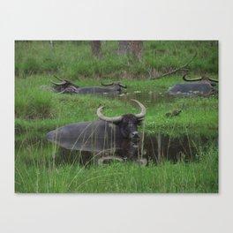 Water Buffalo on Safari captured by Jo DiLorenzo Canvas Print