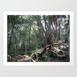 Forest Walks 1 Art Print