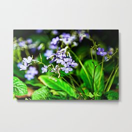 Blue, Violet & White Cluster Of Small Flowers Closeup Metal Print