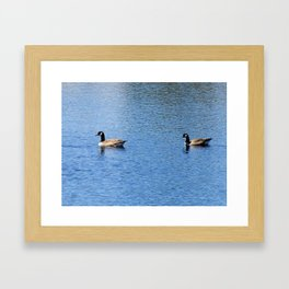 Pair of Geese Wading On A Lake Framed Art Print