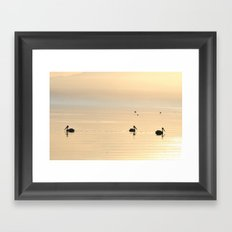 WHITE PELICANS - SUNSET - SALTON SEA Framed Art Print