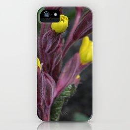 Primirose 'Marmalade' iPhone Case