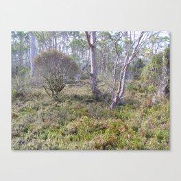 Mountain bush Canvas Print