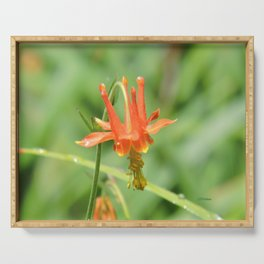 Columbine in the Breeze Serving Tray