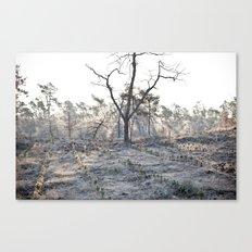 -14 degrees celsius Canvas Print