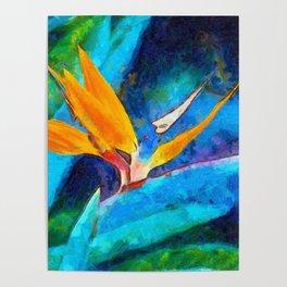 Bird Of Paradise Plant art Poster