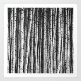 Birch || Art Print