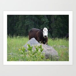 Curious Cow Art Print