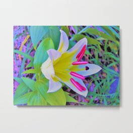 Beautiful White Trumpet Lily with Yellow Center Metal Print