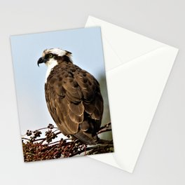 Magnificent Osprey Raptor by Reay of Light Stationery Cards