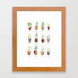 Culinary Herbs Framed Art Print