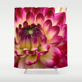 Pink Dahlia 65 Shower Curtain