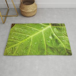 Alocasia After the Rain Rug