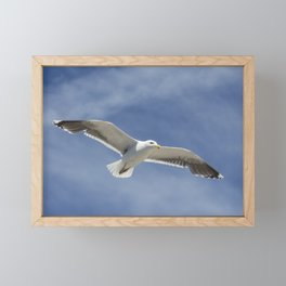 Wildlife Seagull flying Framed Mini Art Print