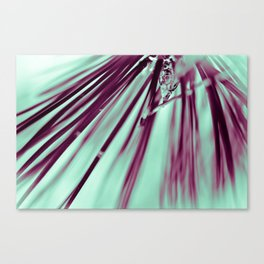 Pine Beauty Canvas Print