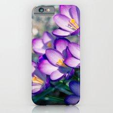 Crocus is the present of spring iPhone 6s Slim Case